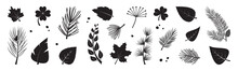 Leaf Tree Vector Icon, Black Silhouettes, Fir And Pine Cone, Evergreen, Leaves Different Shapes Isolated On White Background. Nature Illustration