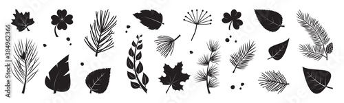 Fototapeta Leaf tree vector icon, black silhouettes, fir and pine cone, evergreen, leaves different shapes isolated on white background