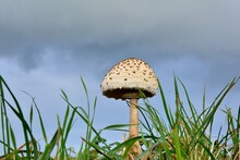 Beautiful Mushroom In A Field
