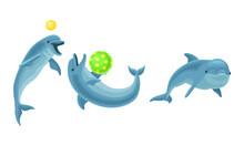 Blue Dolphin As Aquatic Mammal...