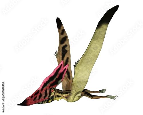 Obraz na plátně Thalassodromeus prehistoric bird flying isolated in white background - 3D render
