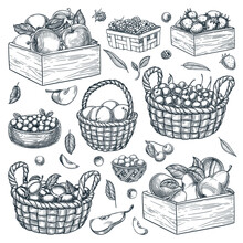 Baskets, Wooden Boxes, Containers With Berries And Fruits On White Background. Hand Drawn Sketch Vector Illustration