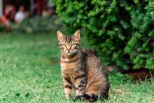 Just Another Croatian Cat In Split