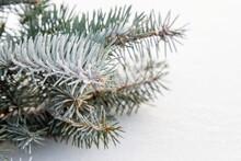 Image With Christmas Tree.