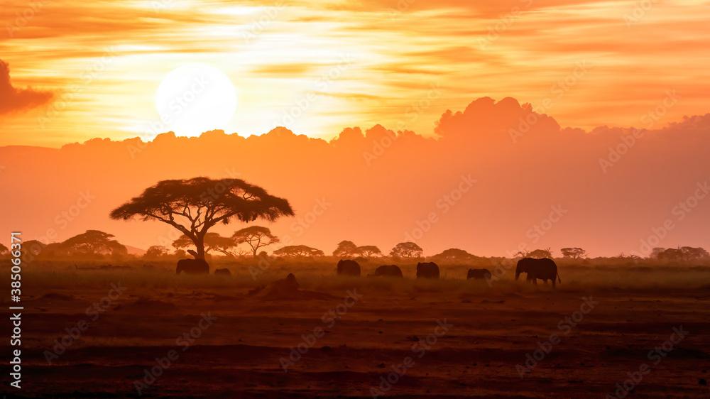 Fototapeta A herd of African elephants walking in Amboseli at sunset