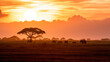 canvas print picture - A herd of African elephants walking in Amboseli at sunset