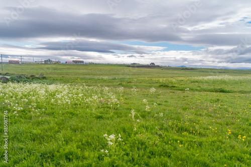 Fototapeta Meadow on Seltjarnarnes peninsula near Reykjavik at cloudy day.
