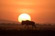 Leinwandbild Motiv African safari in red dawn sunrise