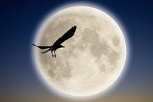 満月とカラス