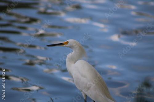 Photo Ave acuática descansando en la orilla del lago