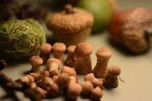 Little Honey Mushrooms Close-up On A Blurred Background Of Acorn