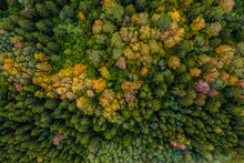 Aerial View Of The Colorful Autumn Forest