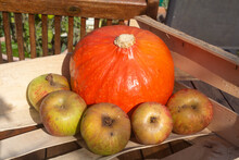 Pumpkin And Apples In A Crate After Harvesting During Autumn