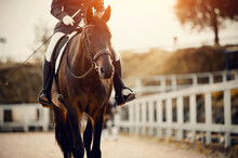 Equestrian Sport. Portrait Of ...