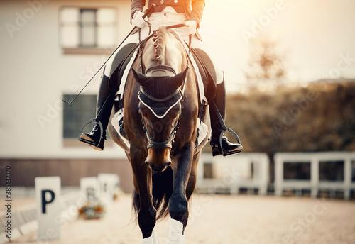 Equestrian sport Fototapeta