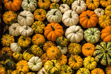 Gourds On Display In The Market