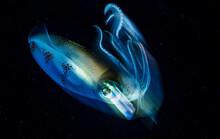 Fast Squid