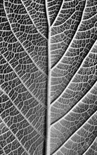 Black And White Plant Details