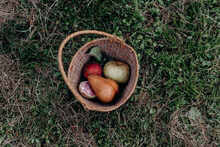 Still Life Of A Woven Basket With Pear, Apple, And A Radish Sitting On A Lawn Near Portland Oregon