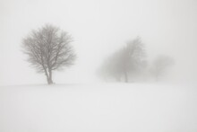 Winter Landscape With Fog On M...