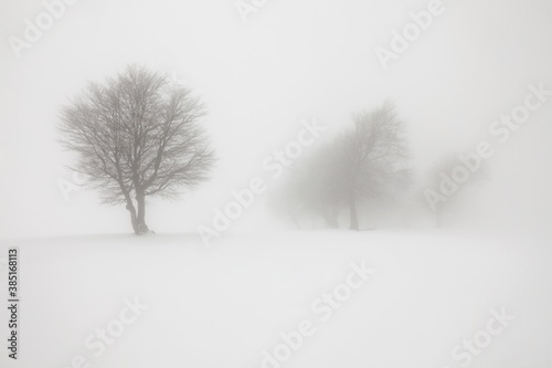 Winter landscape with fog on Mt. Schauinsland in the Black Forest, Baden-Wuerttemberg, Germany, Europe