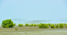 A Group Of Migratory Siberian Birds, Indonesia
