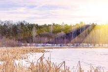 Winter Natural Landscape. Bare...