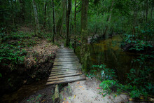 Green Forest Woodland Nature A...