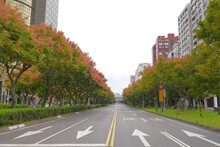 Taiwanese Rain Trees Are Blooming On Both Sides Of The Dunhua South Road In Taipei, Taiwan. Koelreuteria Elegans, More Commonly Known As Flamegold Rain Tree Or Taiwanese Rain Trees.