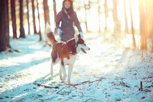 Children Play With A Dog In The Winter Landscape Of A Sunny Forest, Snowfall Girls And Husky