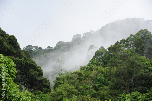 Cuadros en Lienzo Forested mountain slope in low lying cloud with the evergreen conifers shrouded