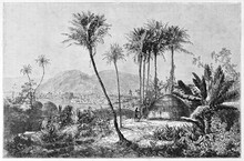 Thatched Huts Surrounded By Deep African Vegetation In Timbo, Town In Mamou Region Of Guinea. Ancient Grey Tone Etching Style Art By Sabatier, Published On Le Tour Du Monde, Paris, 1861