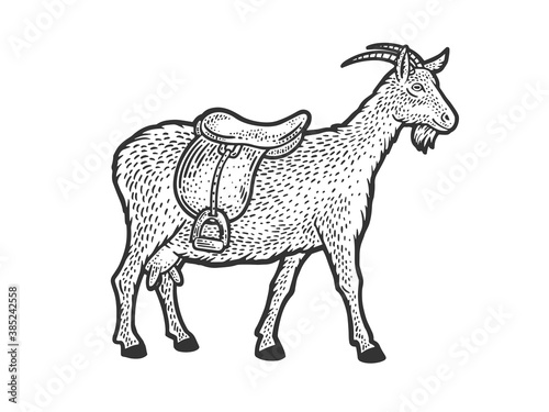 saddle goat sketch engraving vector illustration. T-shirt apparel print design. Scratch board imitation. Black and white hand drawn image.