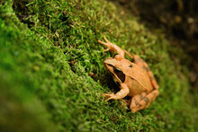 Close-up Photo Of A Agile Frog...