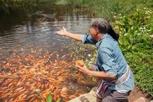 Asian Elderly Farmer Feeding F...