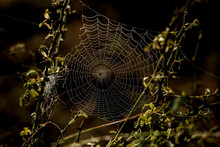 Flowers Packed In Spider Web C...