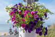 canvas print picture - Blumendekoration mit Petunien