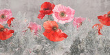 Poppies flowers illustration. Poppies painted on the grunge wall. Beautiful design for postcard, picture, mural, wallpaper, photo wallpaper. - 385303742