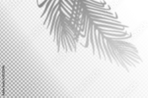 Obraz Vector illustration of realistic tropical shadow overlay effect. Blurred transparent soft light shadow of palm leaves. Contemporary mockup background for product presentation - fototapety do salonu