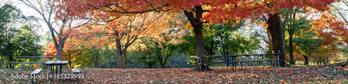 Fotografia Horizontal banner of Brilliant fall colors bursting with  yellow, red and orange