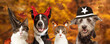 canvas print picture Halloween Dogs and Cats Autumn Web Banner