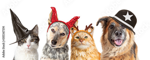 Halloweeen Dogs and Cats - Closeup White Web Banner