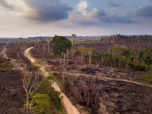 Drone Aerial View Of Deforesta...