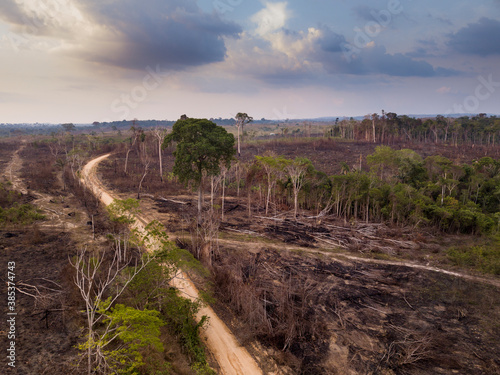 Obraz Drone aerial view of deforestation in the amazon rainforest. Trees cut and burned on an illegal dirt road to open land for agriculture and livestock in the Jamanxim National Forest, Para, Brazil. - fototapety do salonu