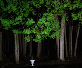 enchanted forest at night