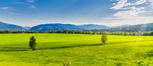 Green Canola Fields On A Sunny...