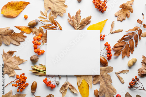 Beautiful autumn composition with empty card on white background - 385427744