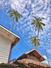 House Under Tall Coconut Tree