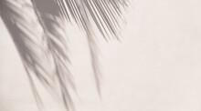 Tropical Sun Shadows On The Wall.