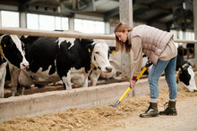 Busy Female Cowshed Employee I...